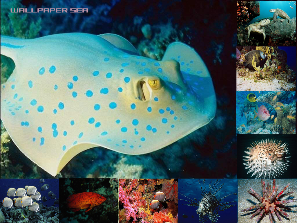 Тематика b морские рыбы черепахи